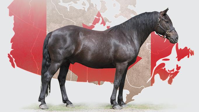 caballo con la bandera detrás