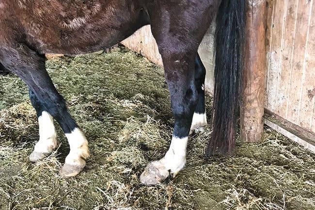 Humedad en los caballos