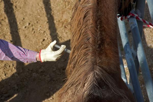 como curar herida en los cascos de un caballo