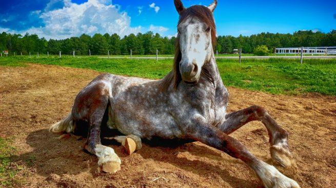 Enfermedades más comunes en caballos