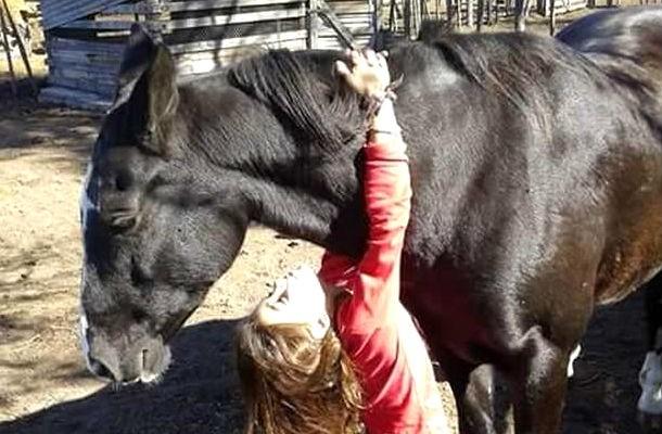 Imprinting en los caballos