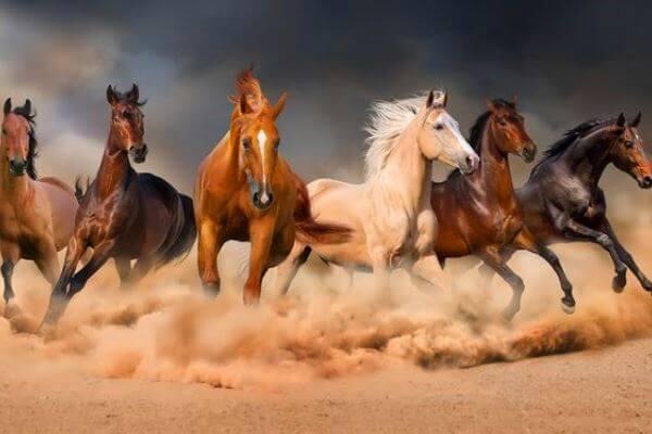 Razas de caballos más comunes