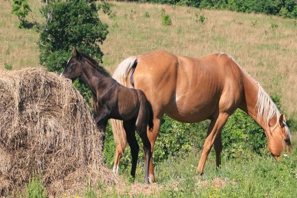 La mejor alimentación para caballos con bajo peso