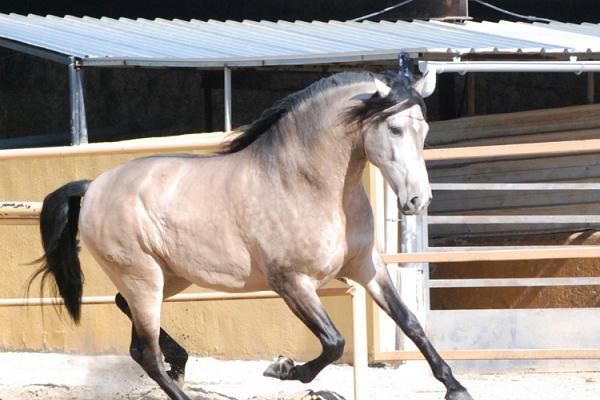 La mejor alimentación para caballos de bajo peso