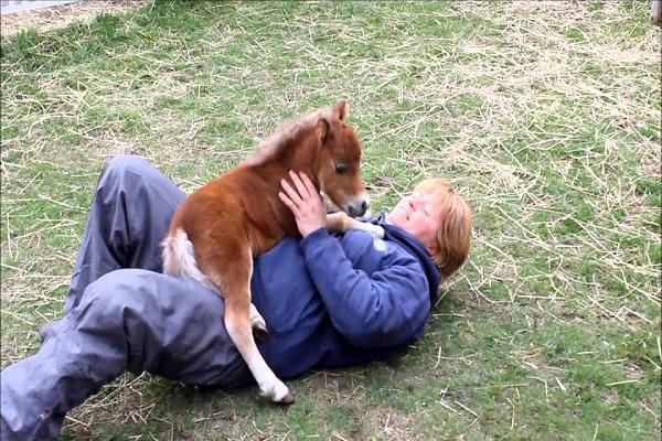 Tamaño caballo enano