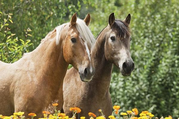 Criaderos de caballo Azteca