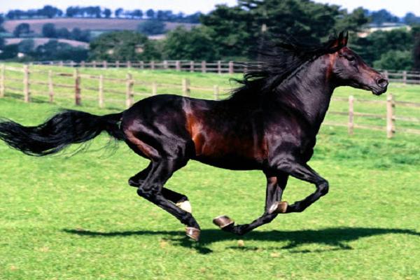 Procedencia del caballo azteca