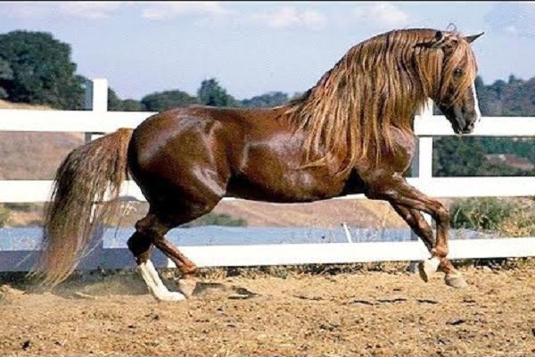 Historia del caballo azteca