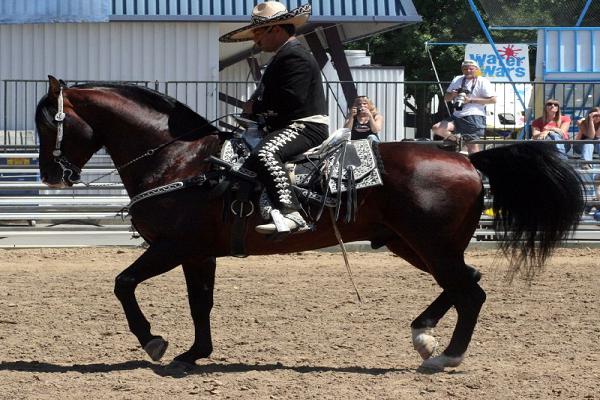 caballos aztecas