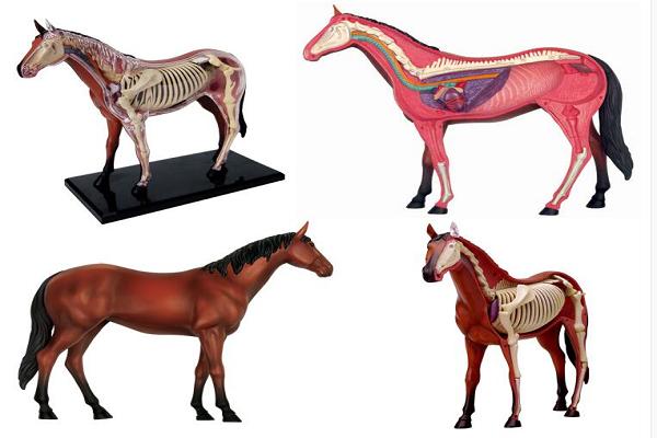Estructura ósea de los caballos