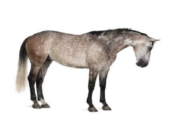 Quien es caballo Frankel