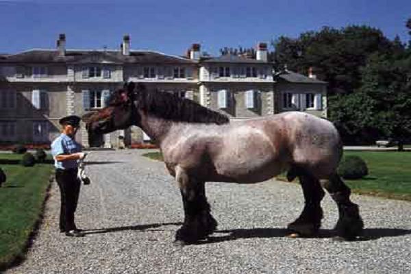 Características físicas del caballo